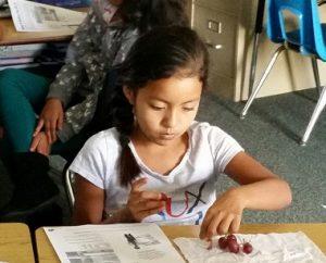 Third-grader Briza Luna examining red grapes.